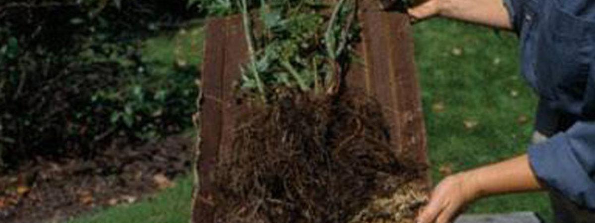 Фруктовые деревья  -10%