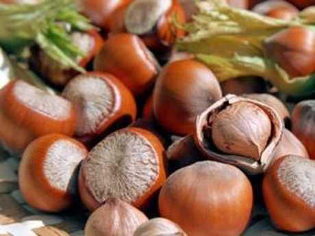 Фундук 'Трапезунд' фундук, лещина, орех, плодовый кустарник