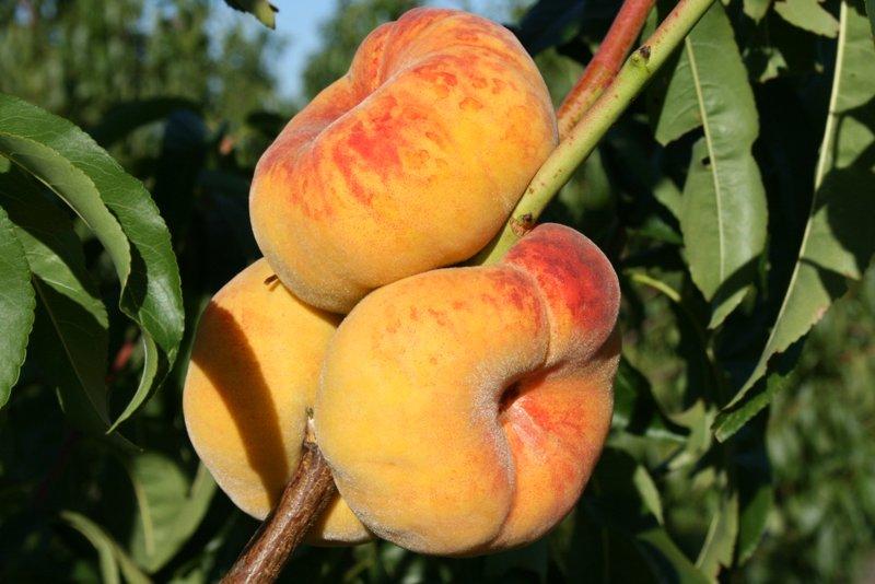 Персик Бельмондо инжирный персик, персик