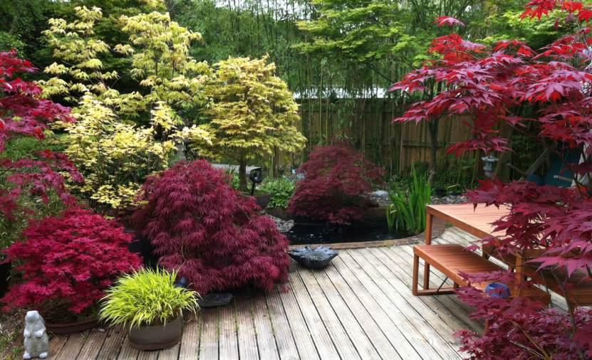 лиственные растения в дизайне