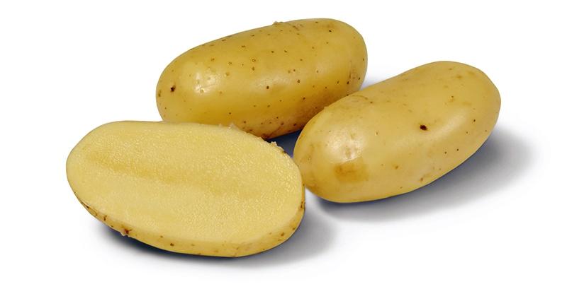 Картофель Челенджер (2 репродукция)