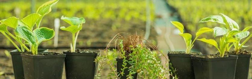 выбор саженцев лиственных растений