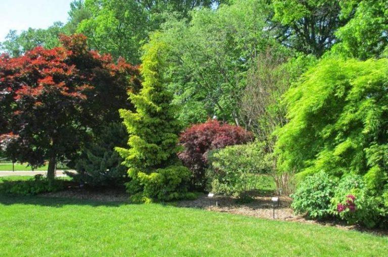 Все лиственные деревья и кустарники