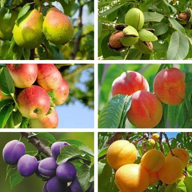 все плодовые деревья