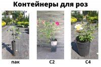 Контейнеры для выращивания роз